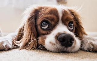 pets and divorce