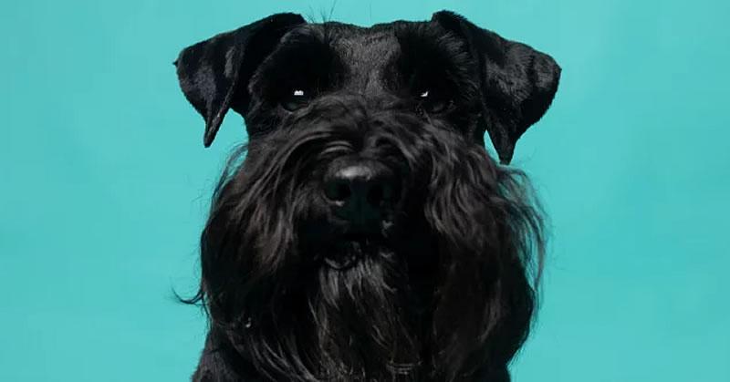 Ferdinand, Tiyce Lawyers dog
